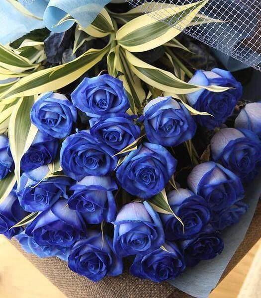 En Güzel Çiçekler ve Anlamları-7